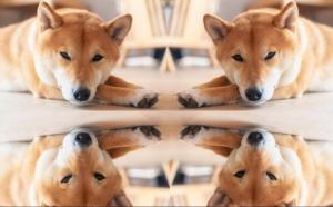 Klony Dogecoinu padají, některé ztratily téměř 100% své hodnoty